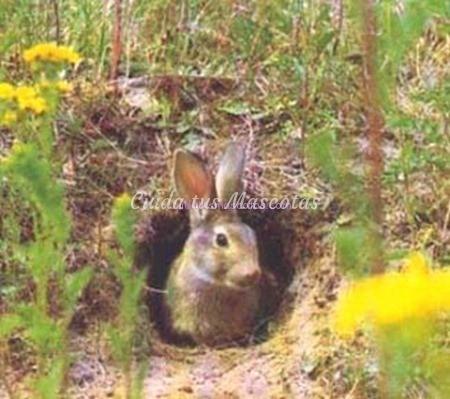 madriguera-conejo