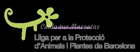 protectora-barcelona-lliga-animals