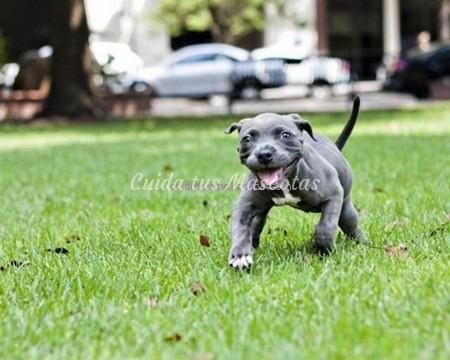 sindrome-cachorro-nadador-recuperado