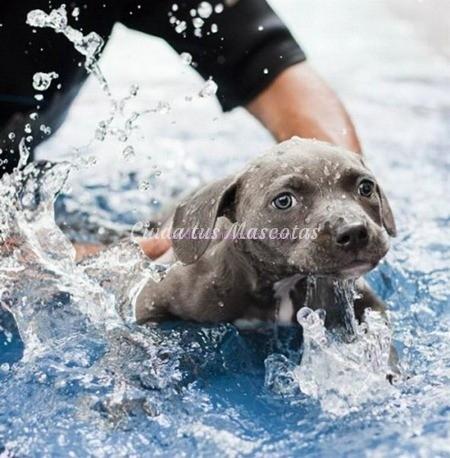 sindrome-cachorro-nadador-rescatado