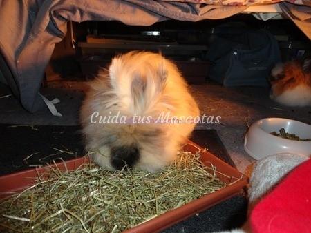 bandeja-heno-conejo