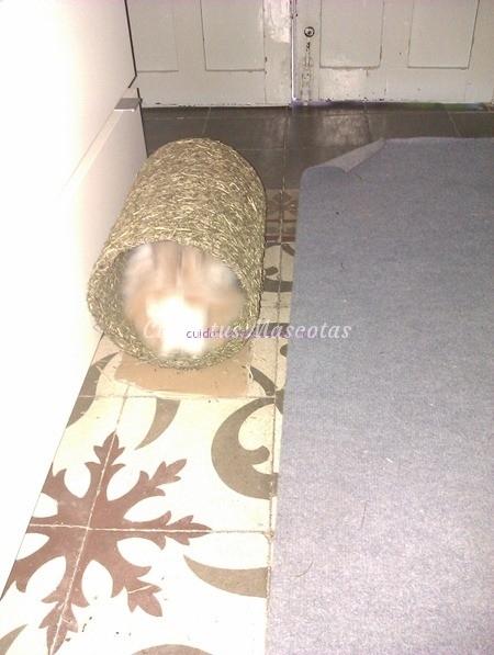conejo-madriguera