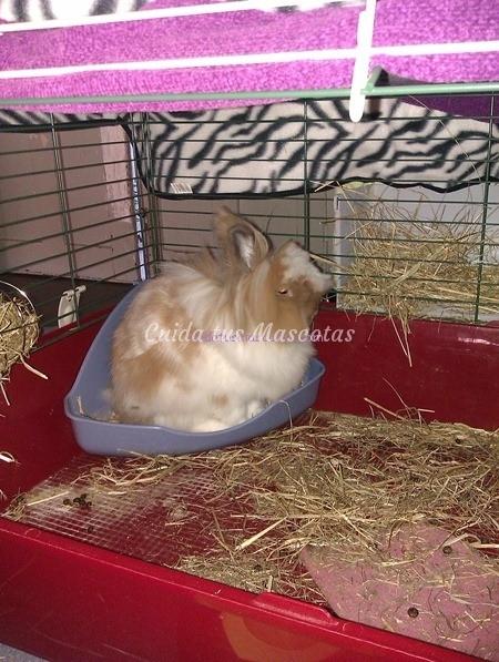 esquinera-conejo