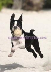 juego-tirar-pelota-perro