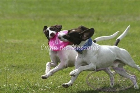 juegos-de-perros-frisbee