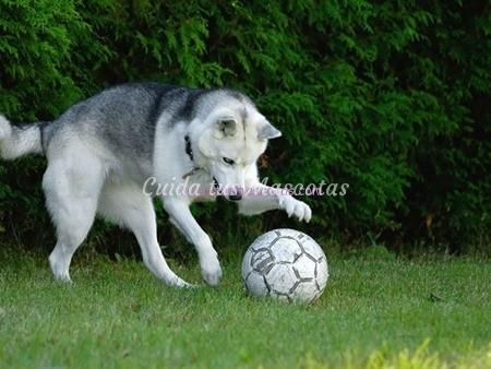 juegos-de-perros-pelota