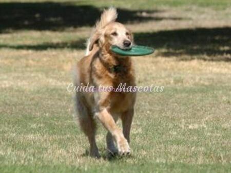 juegos-de-perros