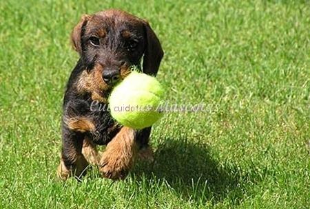 jugando-con-tu-perro-cuando-es-cachorro