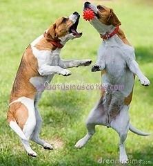 jugar-con-otros-perros