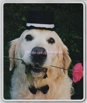 perro busca novia