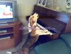 perro-pianista