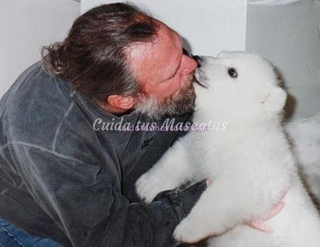 Agee-cachorro-oso-polar