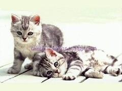 Gatitos-Pequenos
