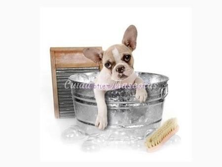 frecuencia-baño-perro