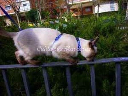 gato-calle