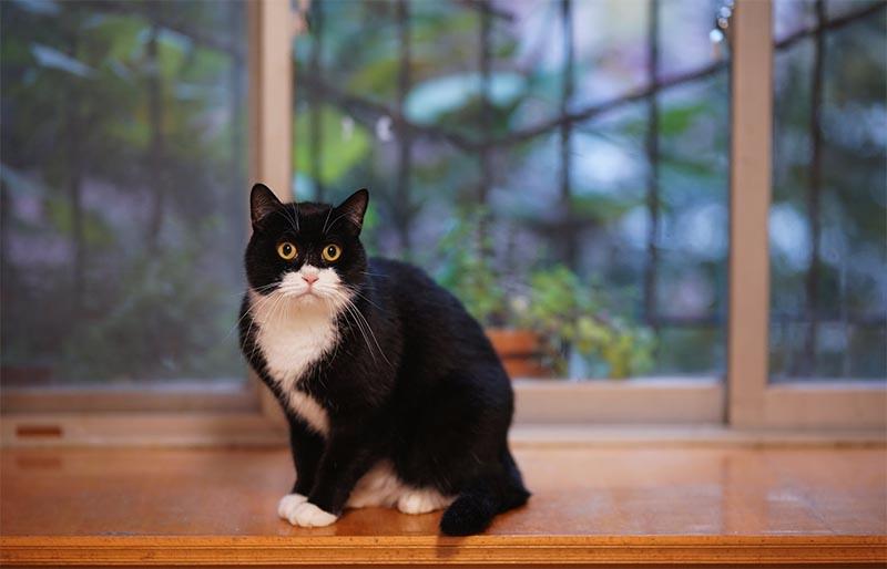 gato dentro de casa