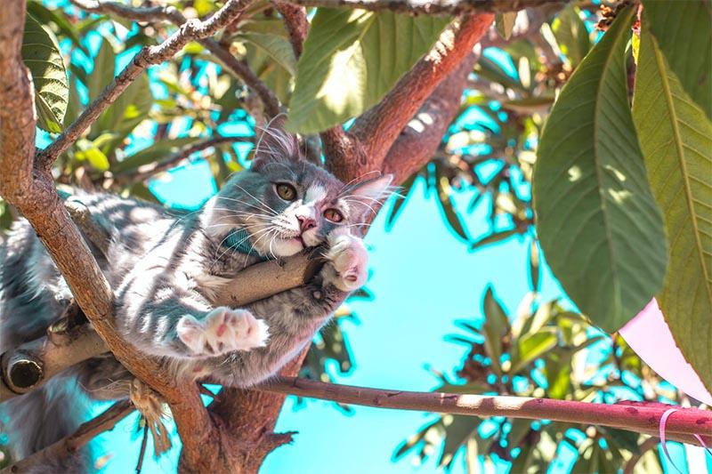 gato fuera de casa