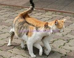 gatos-frotandose