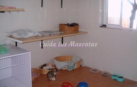 habitacion-gato
