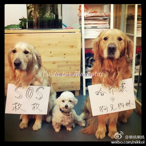 harbin perros