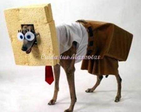 perro-disfraz-bob-esponja