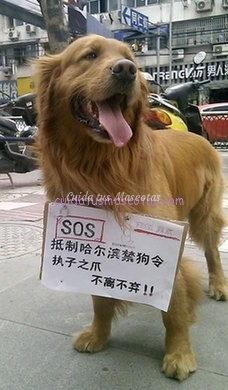 perros china harbin