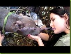 video-pitbull-rescatado