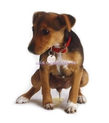 cachorro-orina-caricias