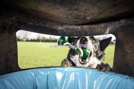 perro-comida-basura
