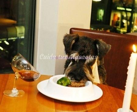 perro-mesa-pienso