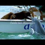 Hermoso beso entre un perro y un delfín