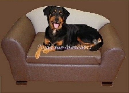 sofa-perro