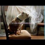 Perro imitador de Adele a ladridos