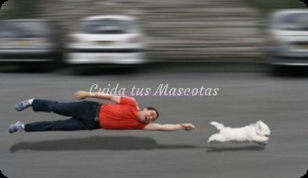 Como pasear correctamente al perro