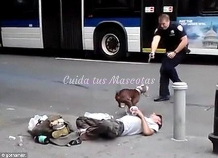 policia-dispara-pit-bull