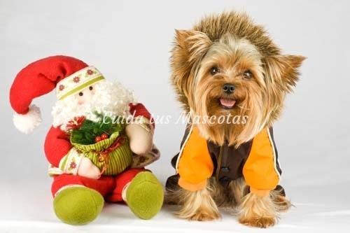 Estas navidades adopta un perro