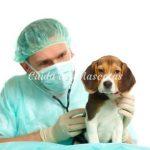 Las enfermedades más habituales de nuestros perros