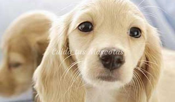 La sarna en los perros