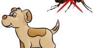 Las garrapatas, pulgas y mosquitos en nuestro perro