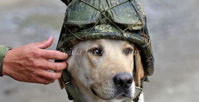 La disciplina en los perros