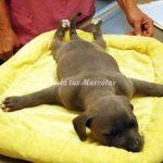 sindrome-cachorro-nadador