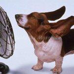 Cuidar los sarpullidos en nuestros perros