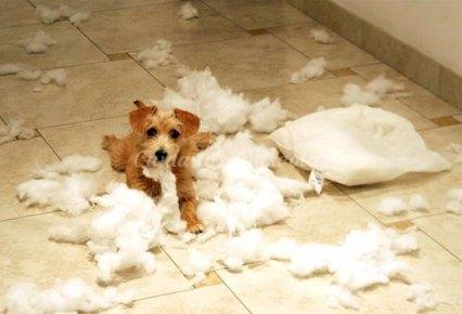 Evitar que nuestro perro destroce la casa