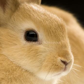 La uveítis y la diarrea en los conejos