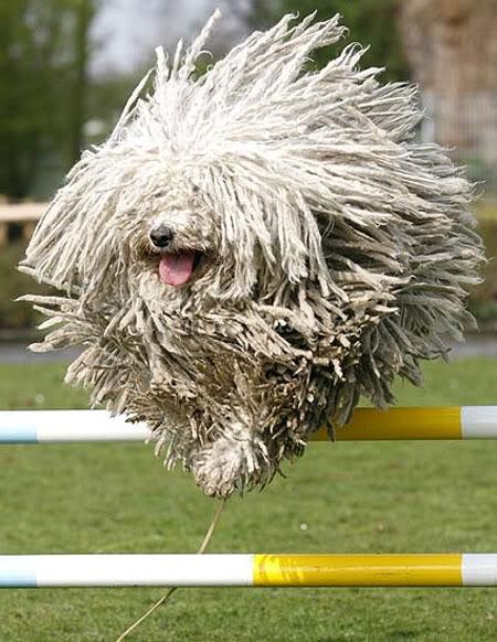 Los cuidados durante la muda de pelo de nuestro perro