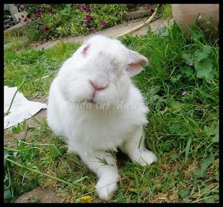 cabeza ladeada conejo