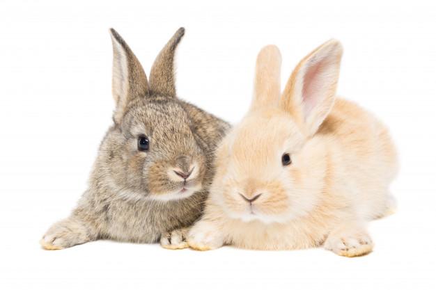desparasitacion conejo