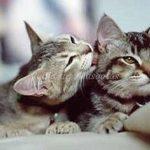 limpieza en gatos