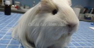 llevar el conejo al veterinario