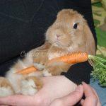 salud del conejo